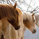 horsesSanctuary3