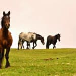horsesSanctuary4