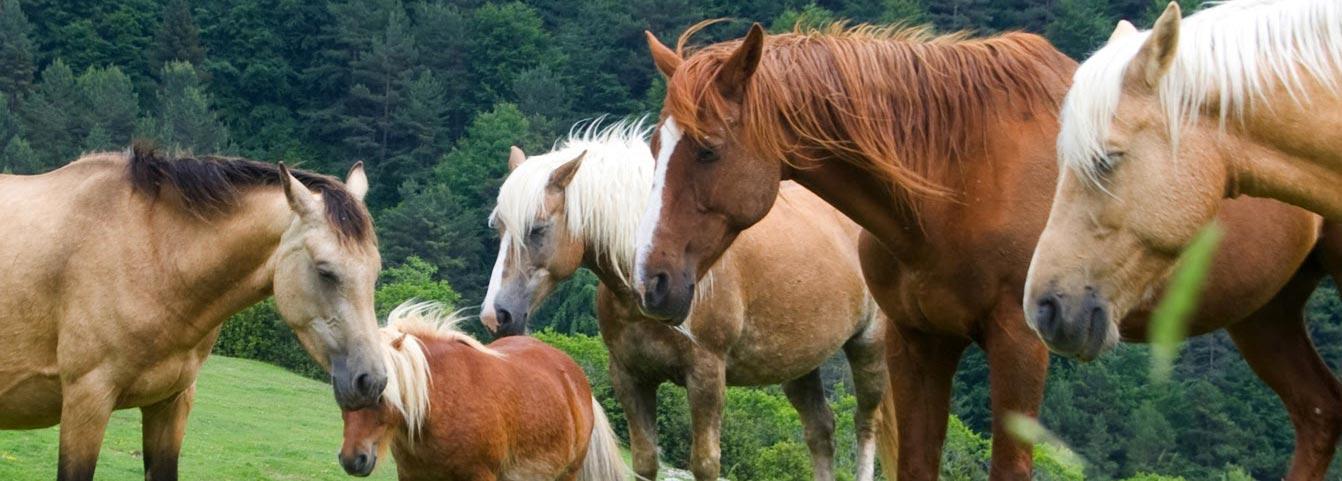 caballos libres